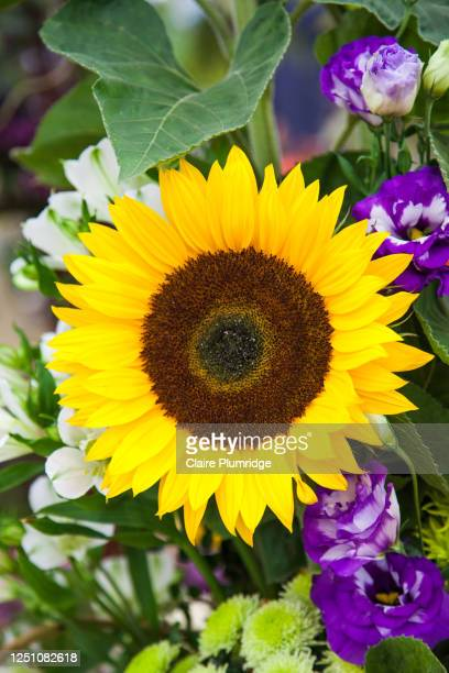 close-up of a yellow sunflower in a flower arrangement - newbury england stock pictures, royalty-free photos & images