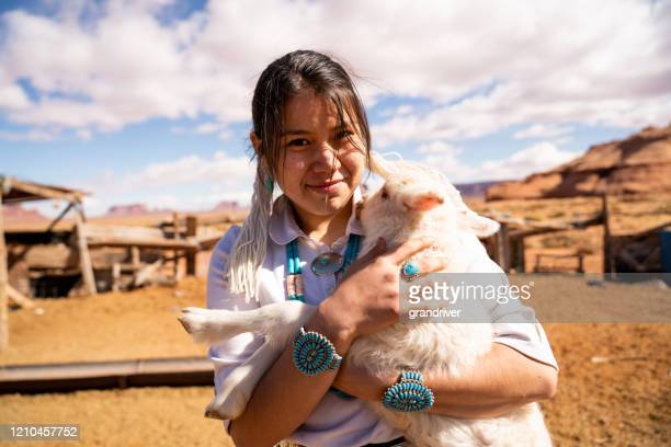 closeup of a young navajo woman holding a lamb from the flock - minority groups stock pictures, royalty-free photos & images