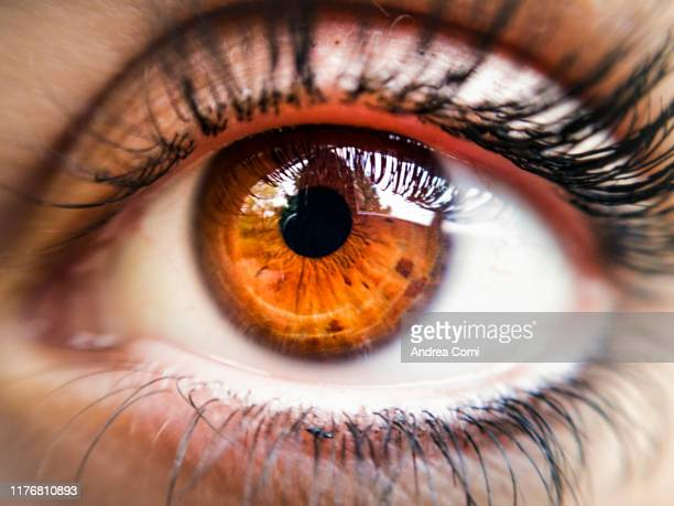 close-up of a young woman brown eye - brown eyes stock pictures, royalty-free photos & images