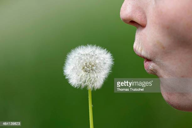 Closeup of a young woman holding a blowball in front of her mouth on May 27 in Maxen Germany Photo by Thomas Trutschel/Photothek via Getty Images