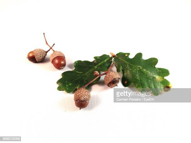 Close-Up Of Acorns Against White Background