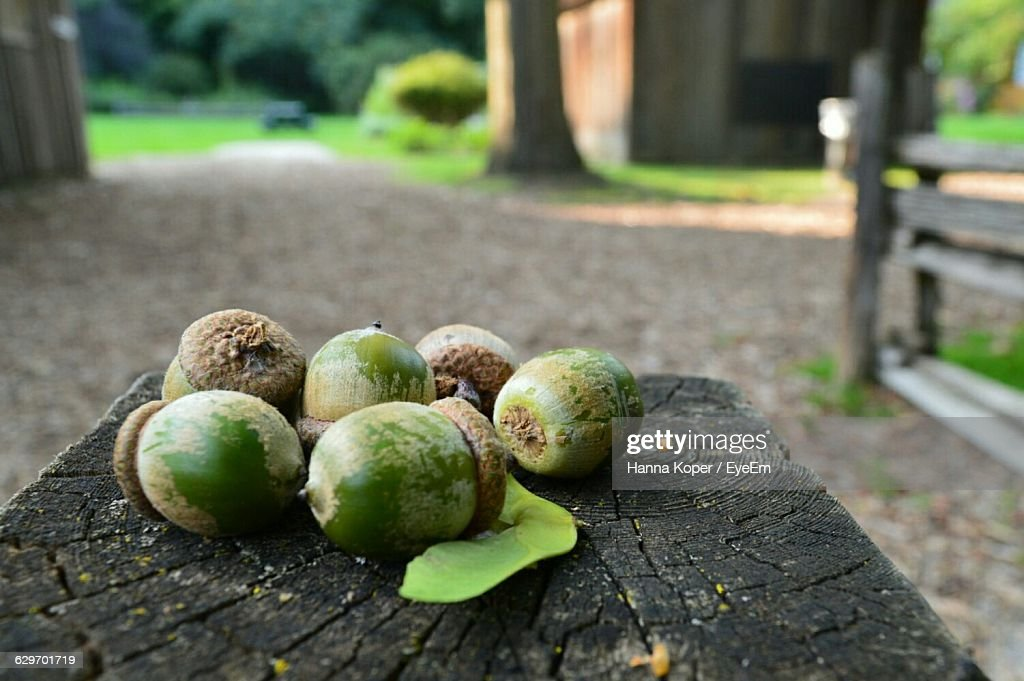 Close-Up Of Acorns On Wood At Field : Stock Photo