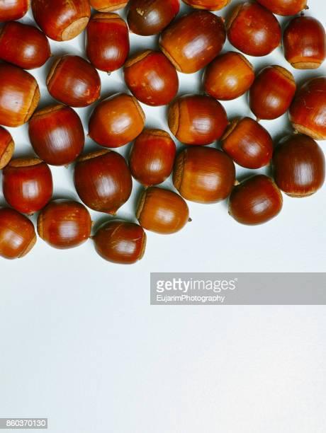 Close-up of acorns