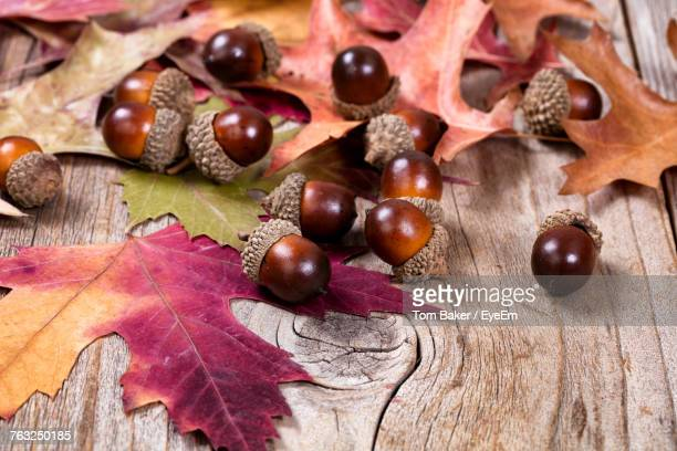 Close-Up Of Acorns With Maple Leaves On Table