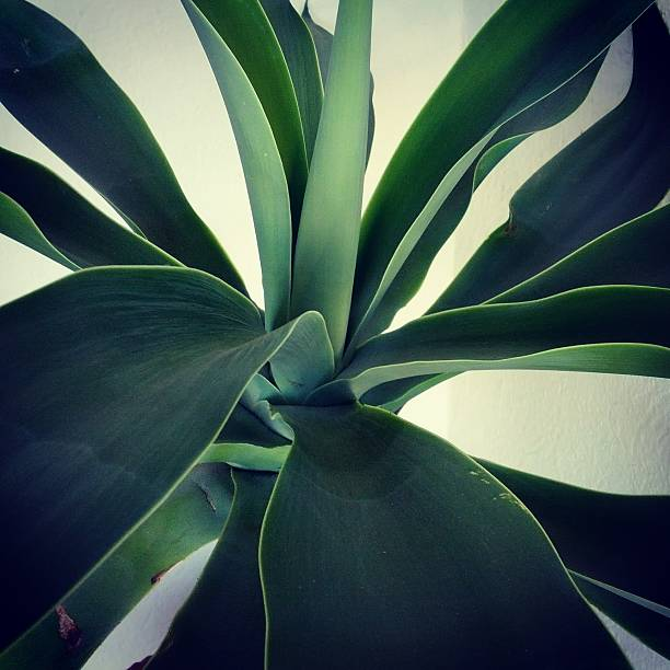 Close-up Of Agave Plant Wall Art