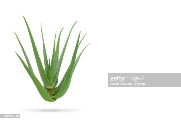 close-up of aloe vera plant against white background - succulent stock pictures, royalty-free photos & images