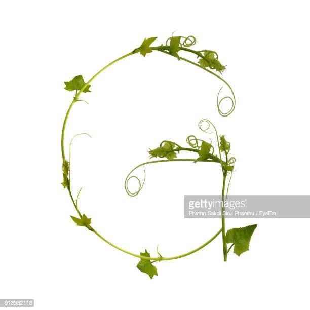 close-up of alphabet made with plant against white background - nature alphabet letters stock pictures, royalty-free photos & images