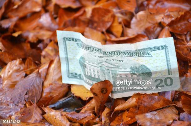 Close-Up Of American Dollar On Dry Maple Leaf During Autumn