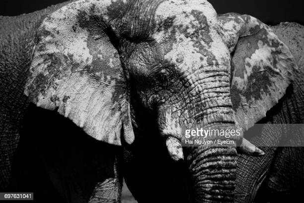 Close-Up Of An African Elephant