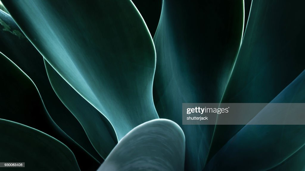 Close-up of an agave plant, America, USA : Foto de stock
