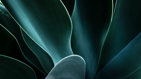 Close-up of an agave plant, America, USA - gettyimageskorea