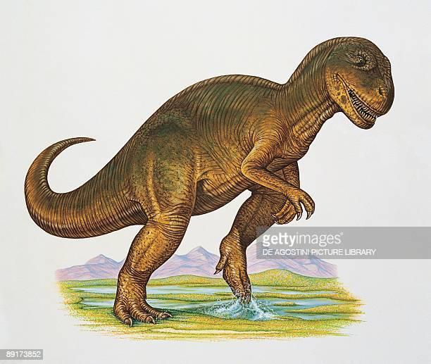 Closeup of an allosaurus dinosaur walking in water