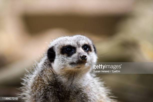 close-up of an animal - newquay stock pictures, royalty-free photos & images