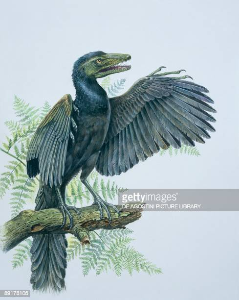 Closeup of an archaeopteryx perching on a branch
