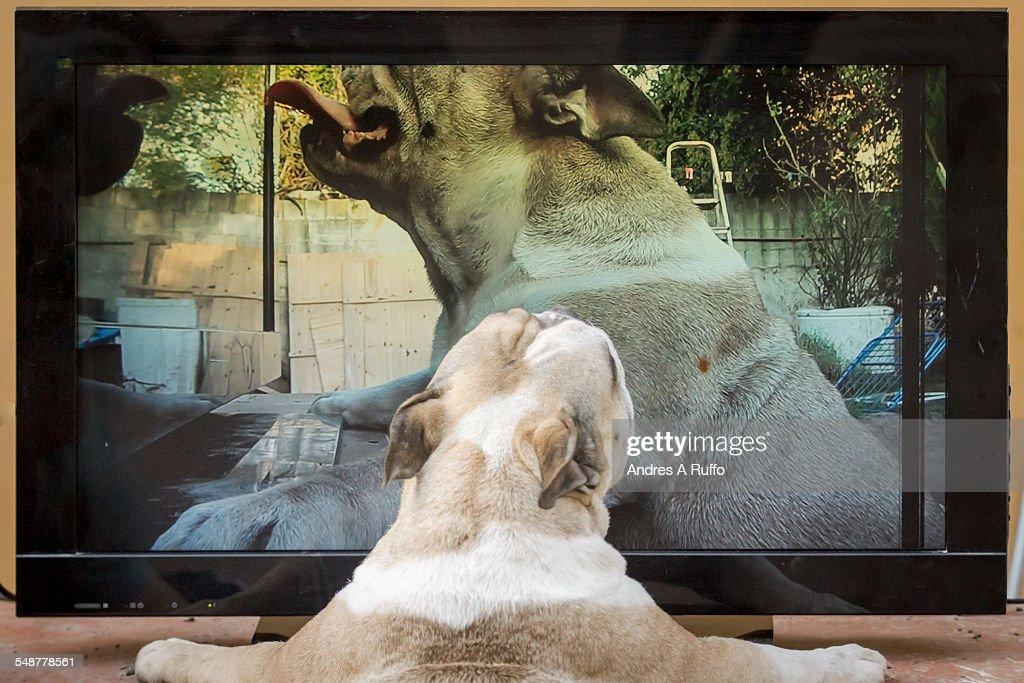 Pets Watching TV : News Photo