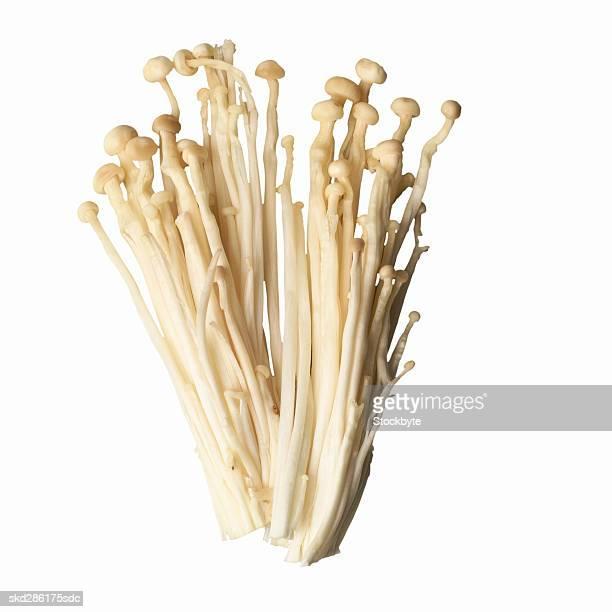 close-up of an enoki mushroom - enoki mushroom stock pictures, royalty-free photos & images