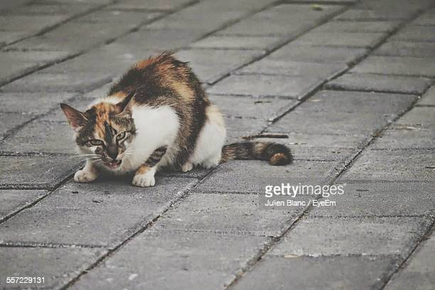Close-Up Of Angry Cat On Street