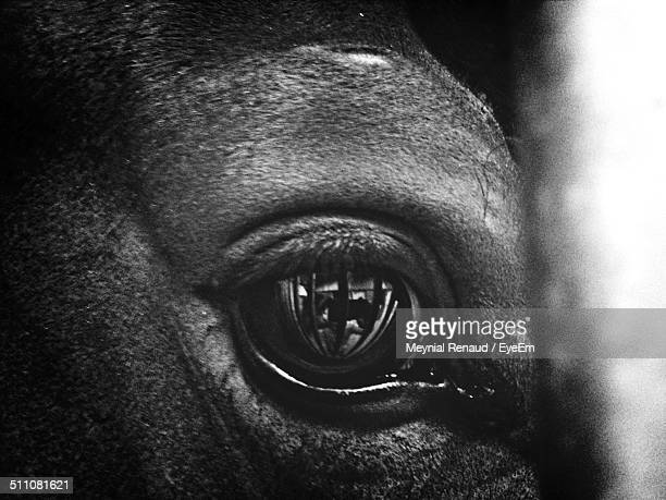 close-up of animal eye - cow eyes stock pictures, royalty-free photos & images