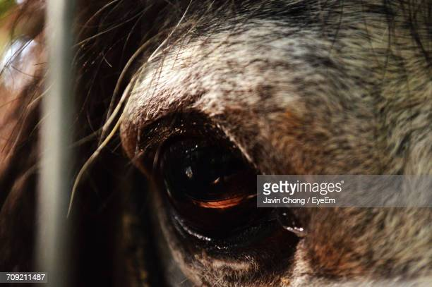 30 Top Eyes Of The Horse Pictures, Photos, & Images - Getty