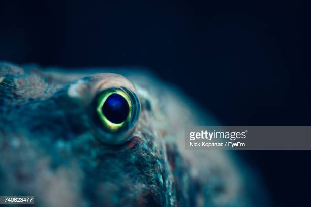 close-up of animal eye - octopus stock pictures, royalty-free photos & images