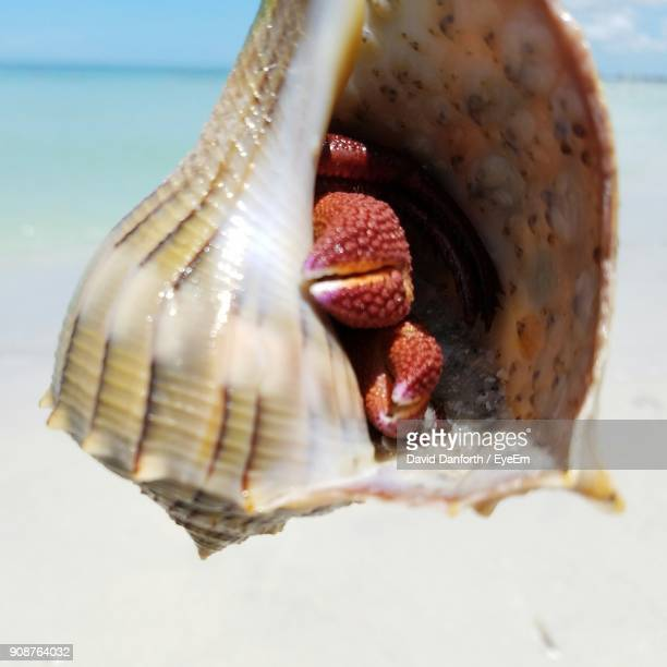 Close-Up Of Animal In Shell At Beach