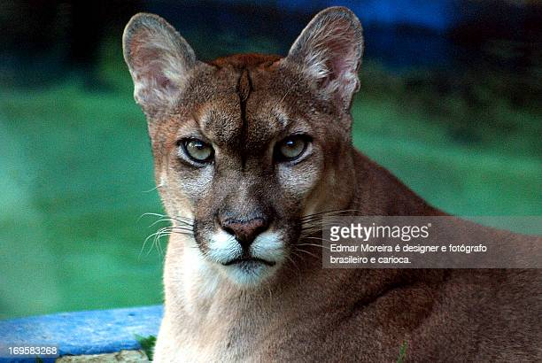 close-up of animal - fotógrafo stock photos and pictures