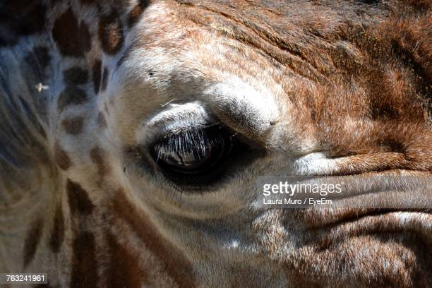 close-up of animal - muro stock photos and pictures