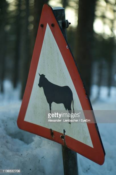 Close-Up Of Animal Sign In Forest During Winter