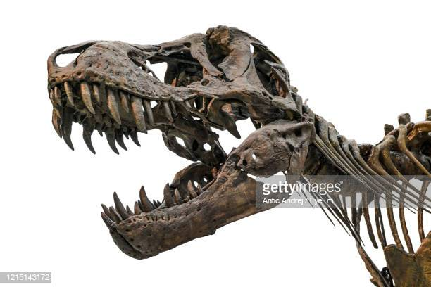 close-up of animal skull - dinosaur stock pictures, royalty-free photos & images