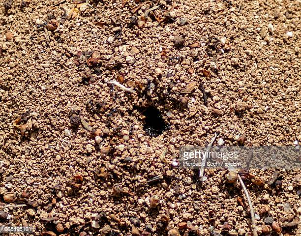 Close-Up Of Ant Nest On Field