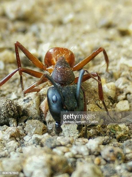 Close-Up Of Ant On Field