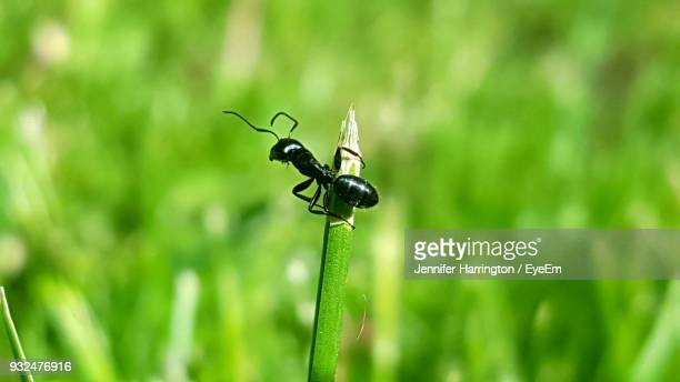 Close-Up Of Ant On Plant During Sunny Day