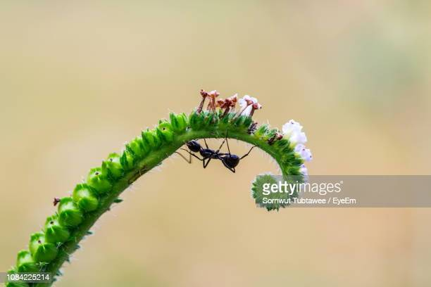 Close-Up Of Ant On Plant