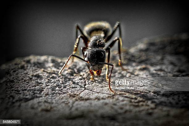 close-up of ant on rock - andres ruffo stock-fotos und bilder