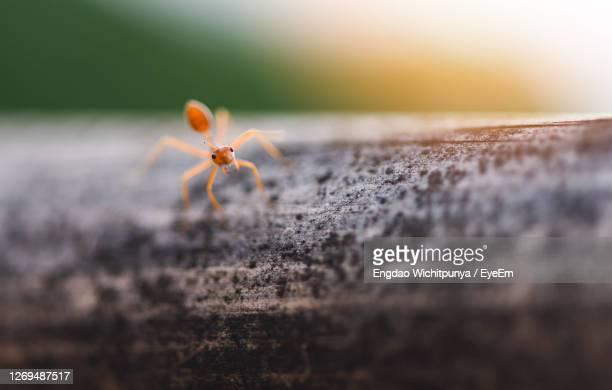 close-up of ant on tree trunk - branch stock pictures, royalty-free photos & images