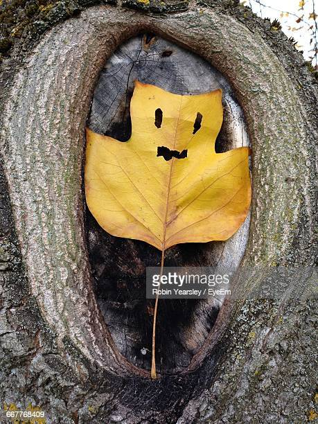 Close-Up Of Anthropomorphic Face On Autumn Leaf Over Tree Trunk
