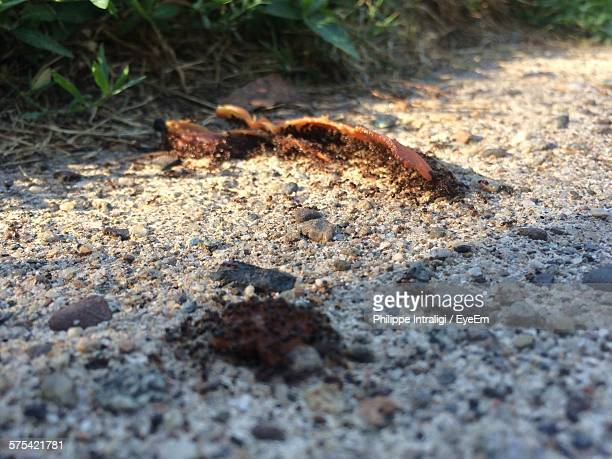 Close-Up Of Ants Eating Food On Street