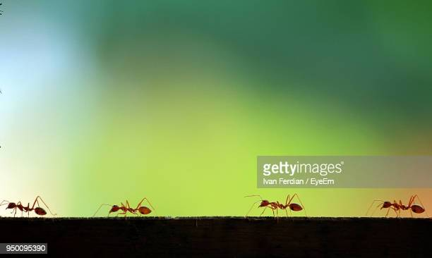 Close-Up Of Ants On Retaining Wall