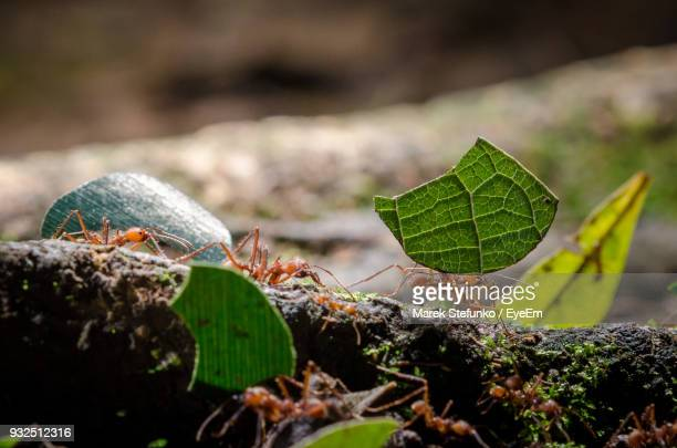 close-up of ants on rock - marek stefunko stock photos and pictures
