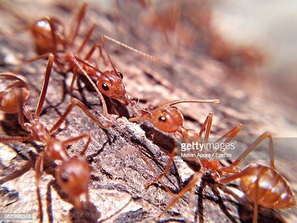 Close-Up Of Ants