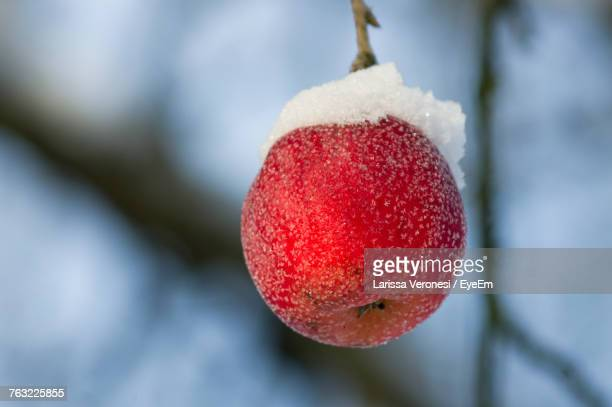 Close-Up Of Apple Hanging From Branch During Winter