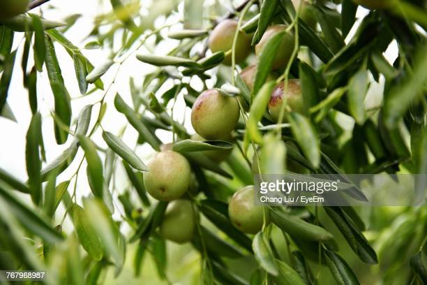 close-up of apples on tree - liu he stock pictures, royalty-free photos & images