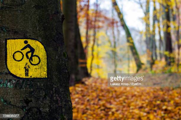 Close-Up Of Arrow Sign On Tree Trunk In Forest