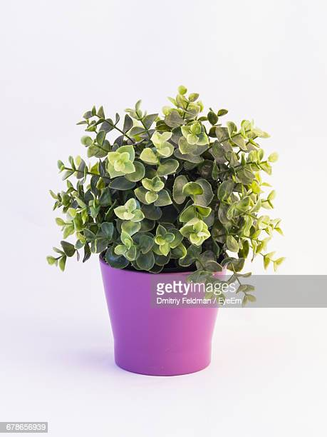 Close-Up Of Artificial Potted Plant Against White Background