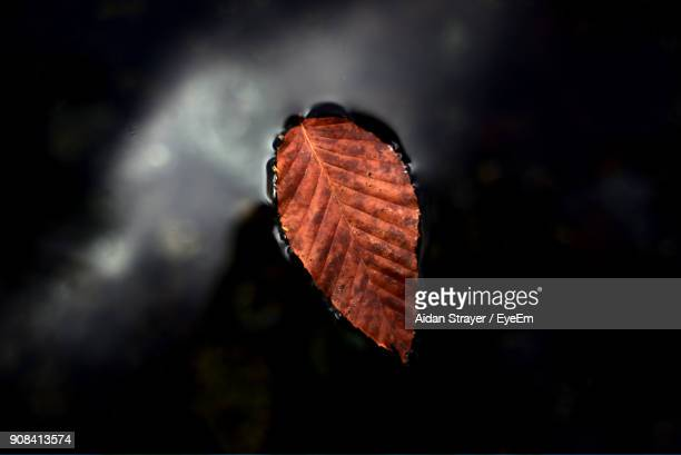 Close-Up Of Autumn Leaf In Water