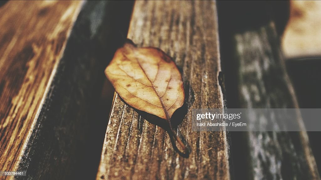 Close-Up Of Autumn Leaf On Bench : Foto stock