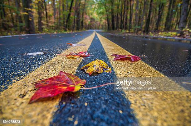Close-Up Of Autumn Leaf On Road