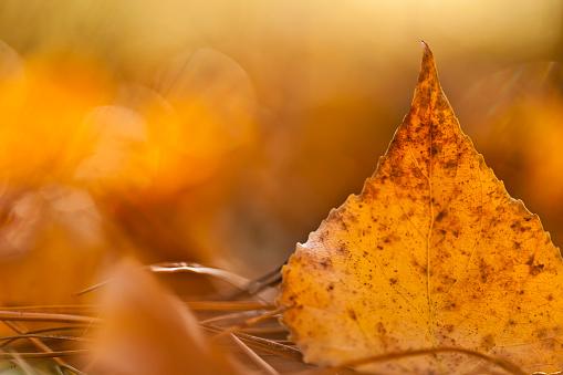 Close-up of autumn leaf - gettyimageskorea