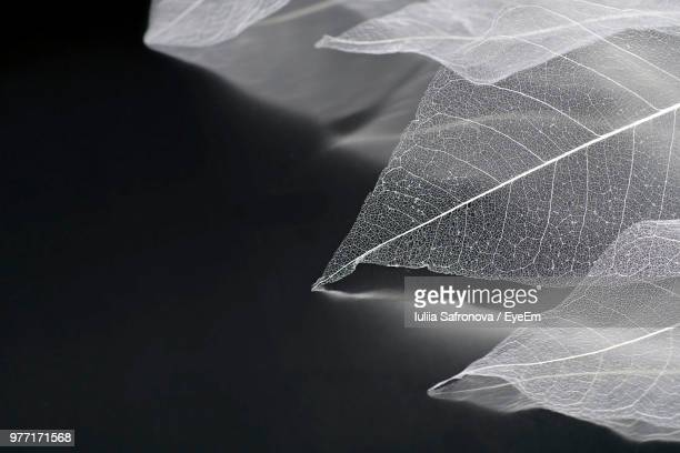 close-up of autumn leaves against black background - 繊細 ストックフォトと画像