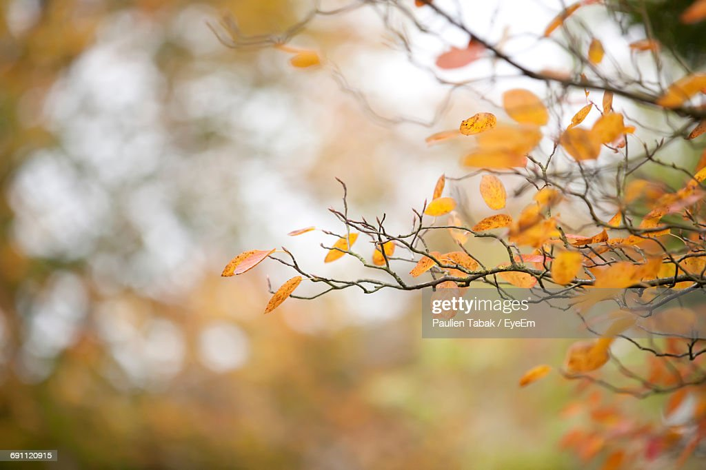 Close-Up Of Autumn Leaves Against Blurred Background : Stockfoto